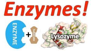 Enzym là gì