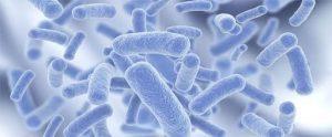 lợi ích của vi khuẩn Bacillus