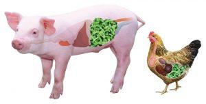 probiotics có vai trò gì