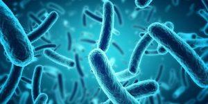 Vi khuẩn Bacillus