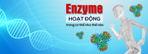 enzyme-trong-co-the-1